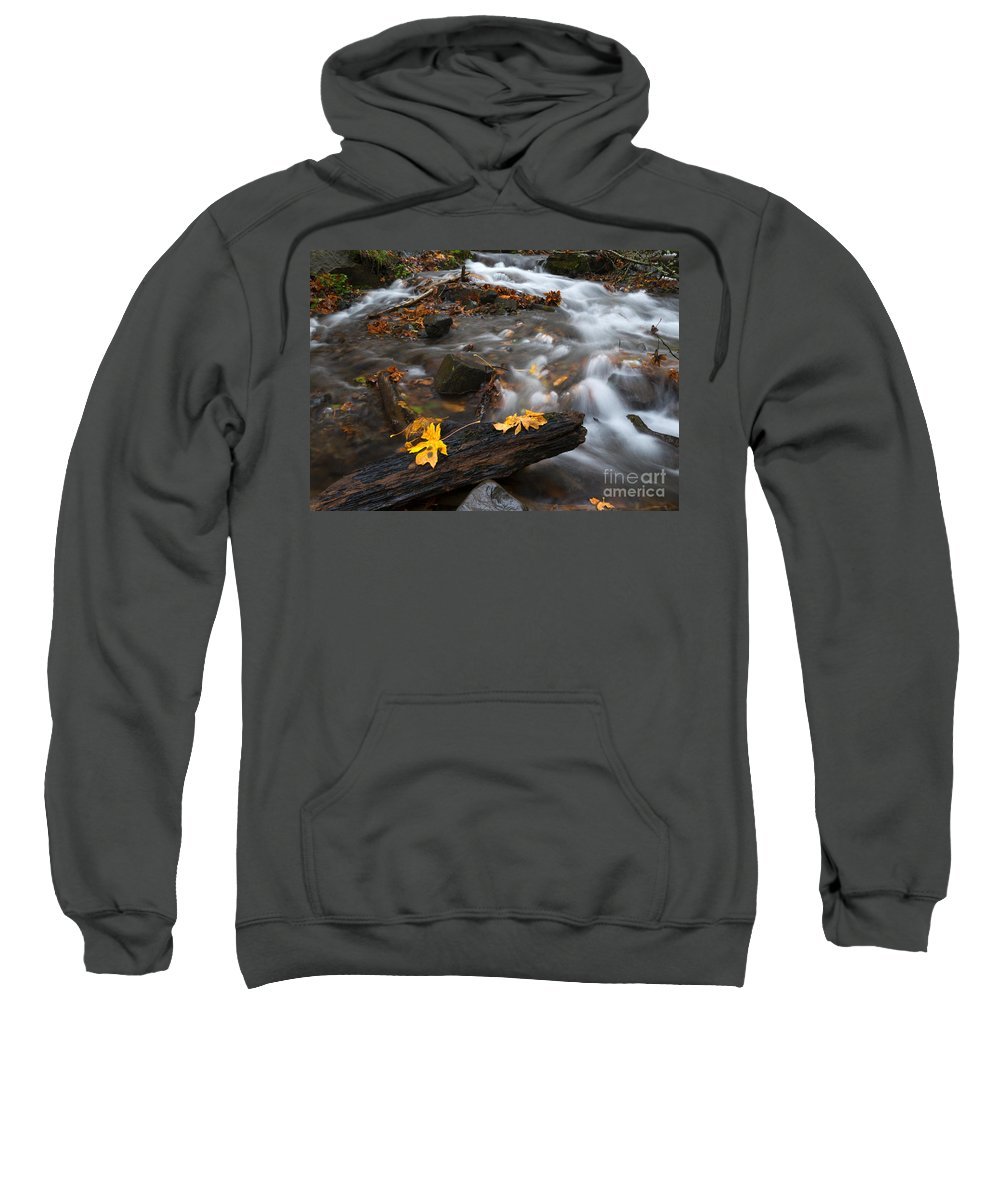 Maple Leaves Sweatshirt featuring the photograph Scattered Gold by Mike Dawson