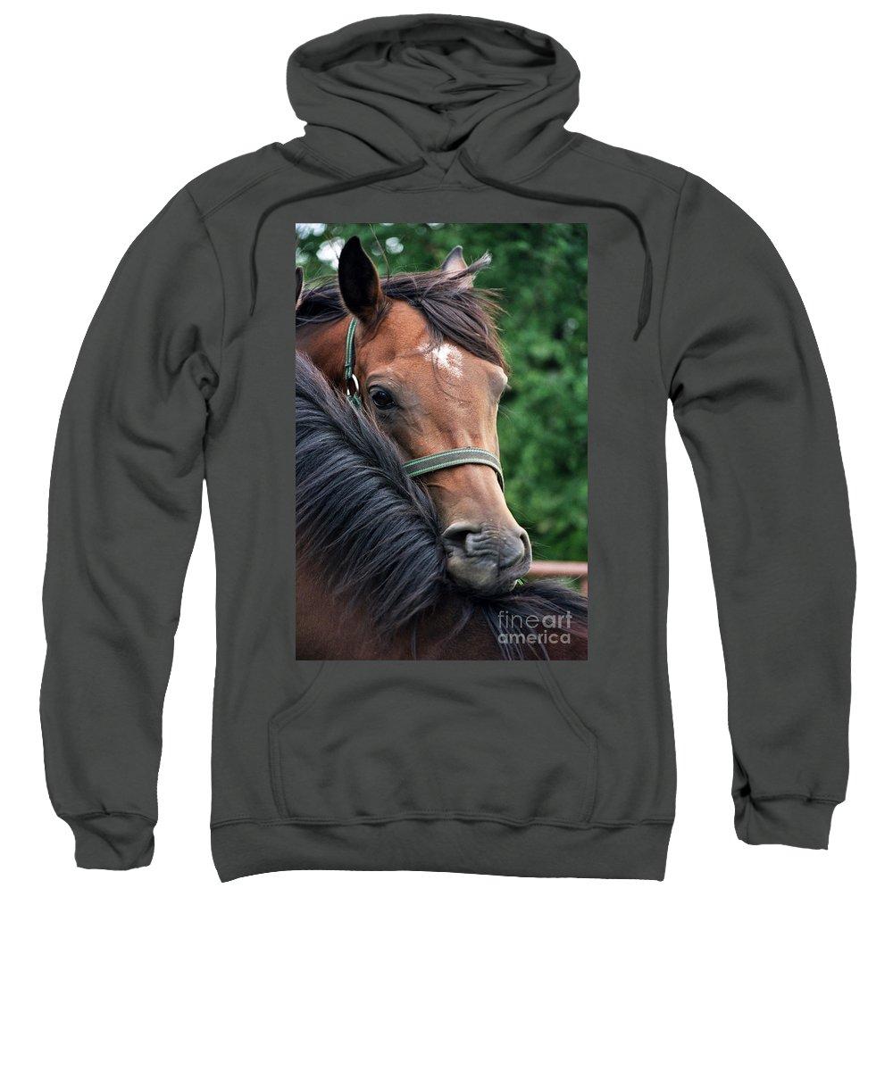 Horse Portrait Sweatshirt featuring the photograph Scratch My Back by Angel Ciesniarska
