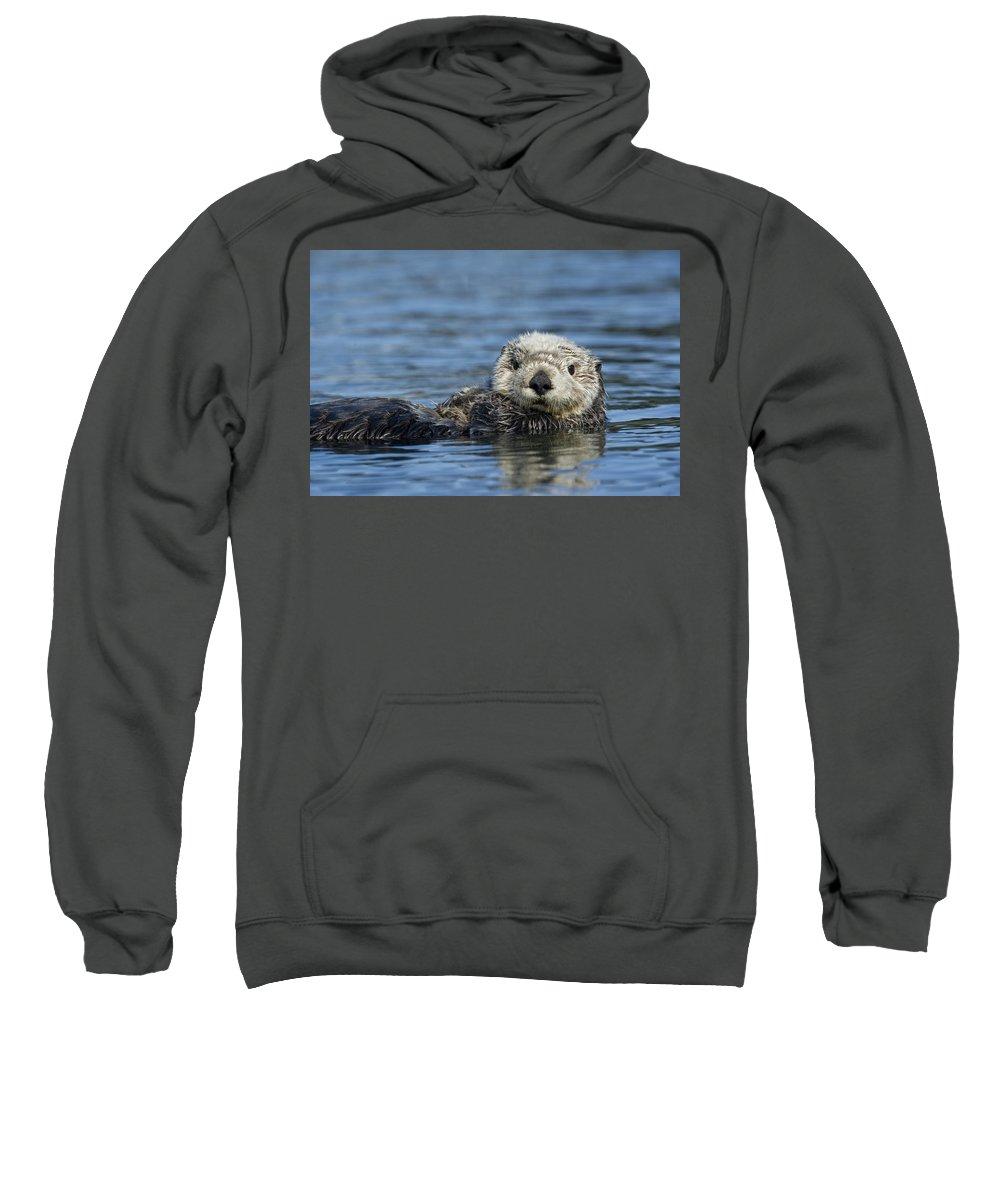 Michael Quinton Sweatshirt featuring the photograph Sea Otter Alaska by Michael Quinton