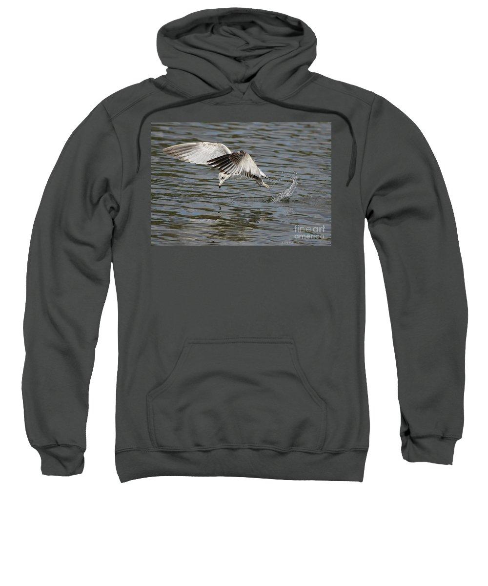 Seagull Sweatshirt featuring the photograph Seagull Dive by Deborah Benoit