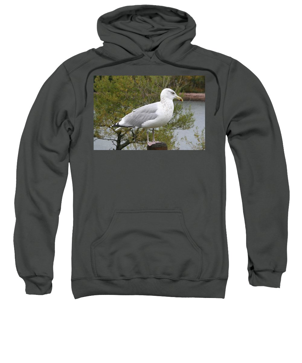 Seagull Sweatshirt featuring the photograph Seagull Outlook by Christiane Schulze Art And Photography