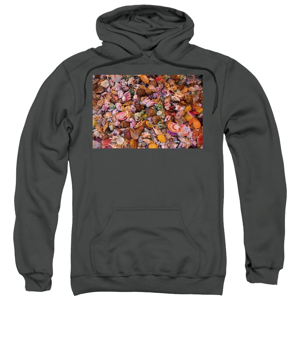 Seashells Sweatshirt featuring the photograph Seashells by Anthony Sacco