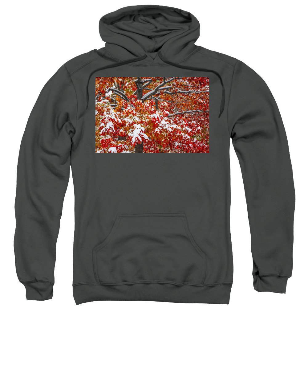 Tree In Autumn With Snow Outlining Branches Sweatshirt featuring the photograph Seasons Of Change by Bill Sherrell