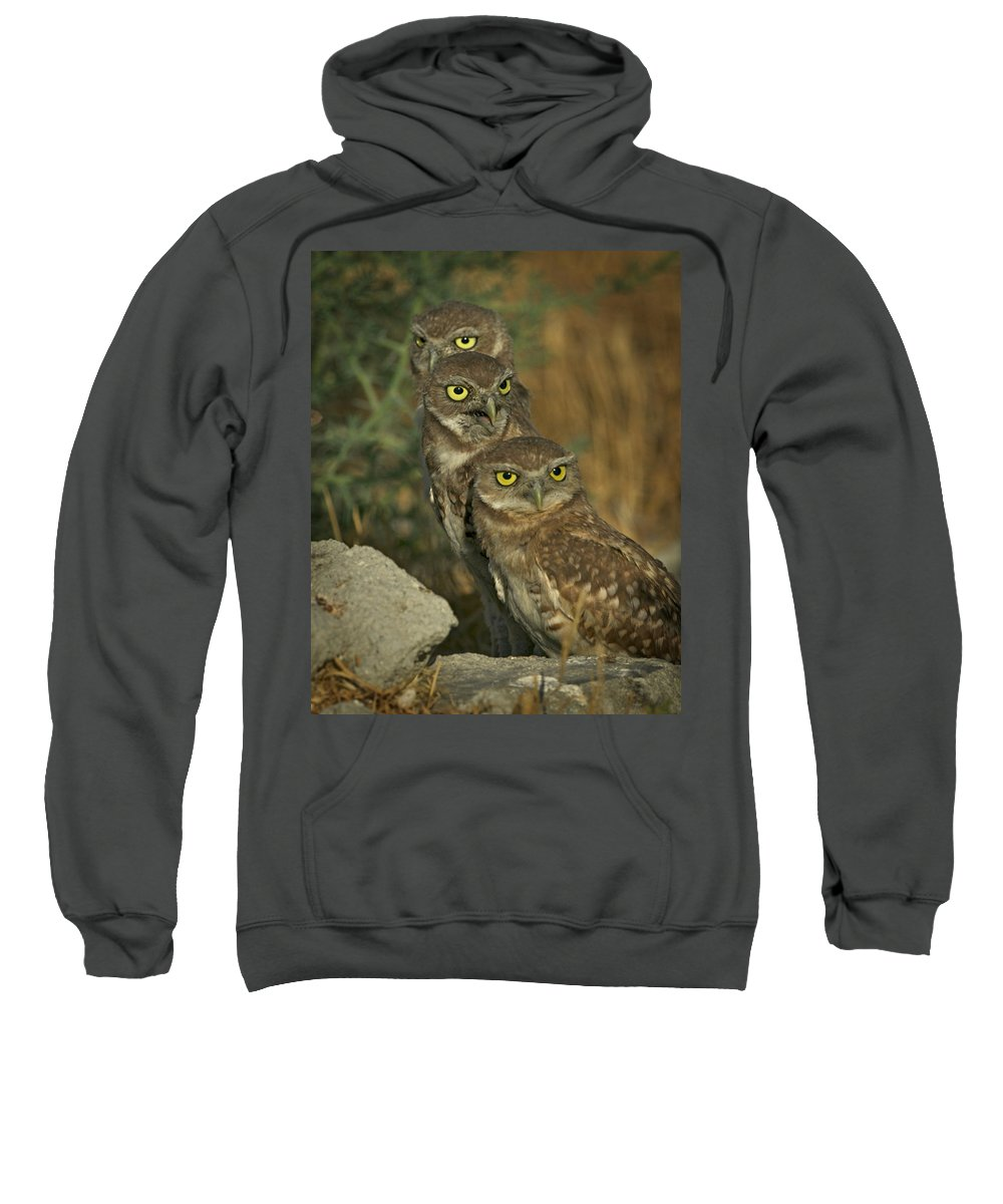 Owls Sweatshirt featuring the photograph See No Evil - Hear No Evil - Speak No Evil by Leslie Reagan - Joy To The Wild Photos