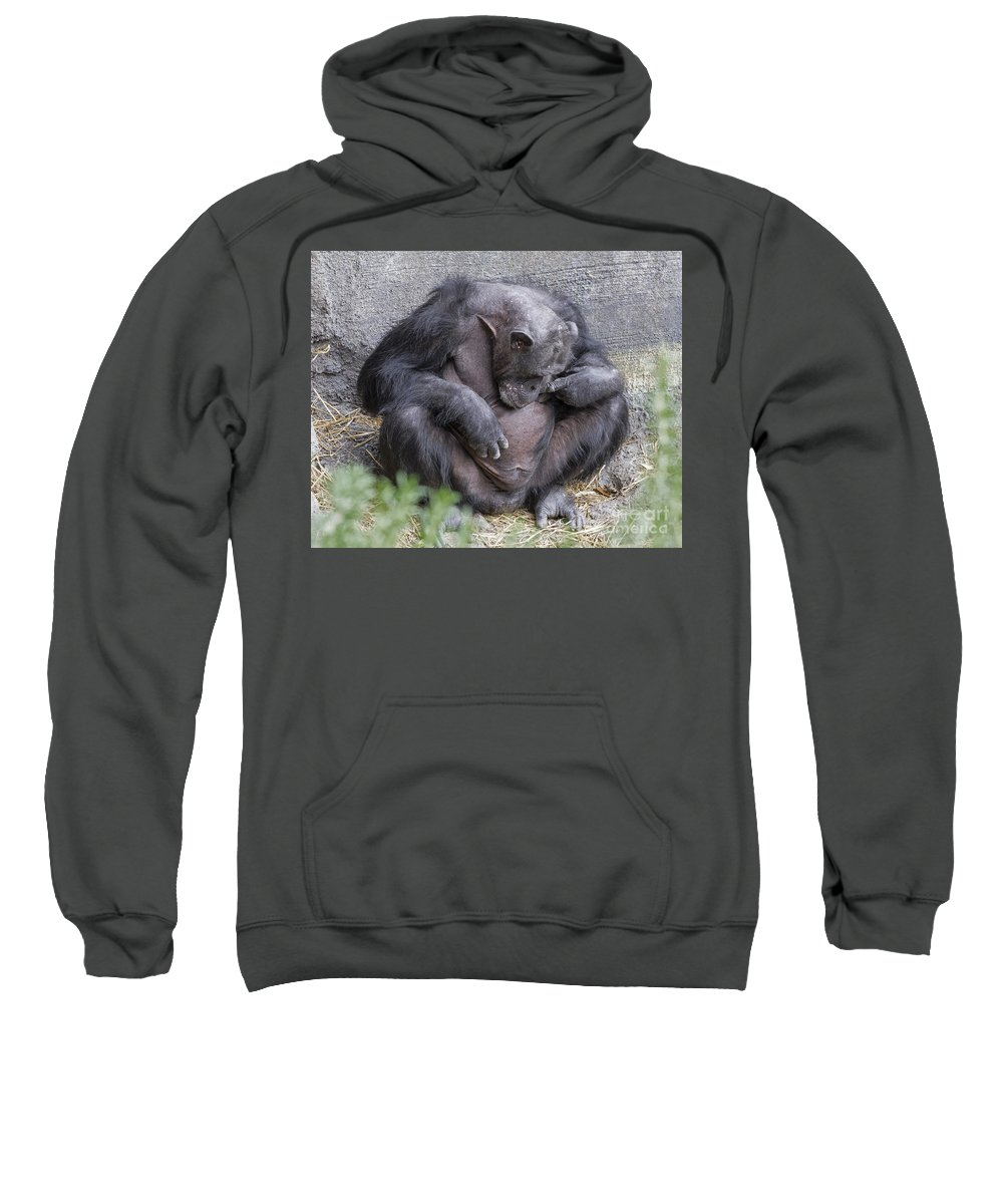 Chimpanzee Sweatshirt featuring the photograph Self Inspection by TN Fairey
