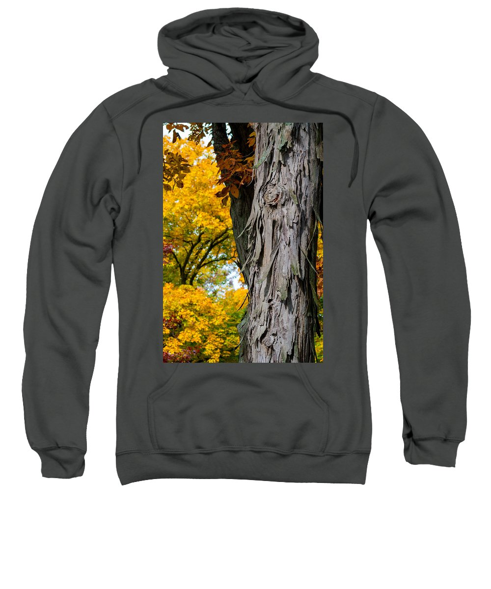 Trees Sweatshirt featuring the photograph Shagbark Hickory Tree by Robert Storost