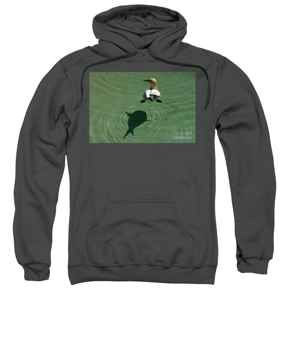 Amsterdam Sweatshirt featuring the photograph Shark Attack by Brothers Beerens