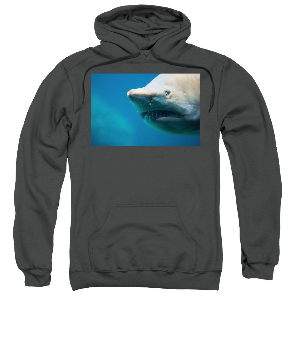 Carcharhinus Sweatshirt featuring the photograph Shark by Johan Swanepoel