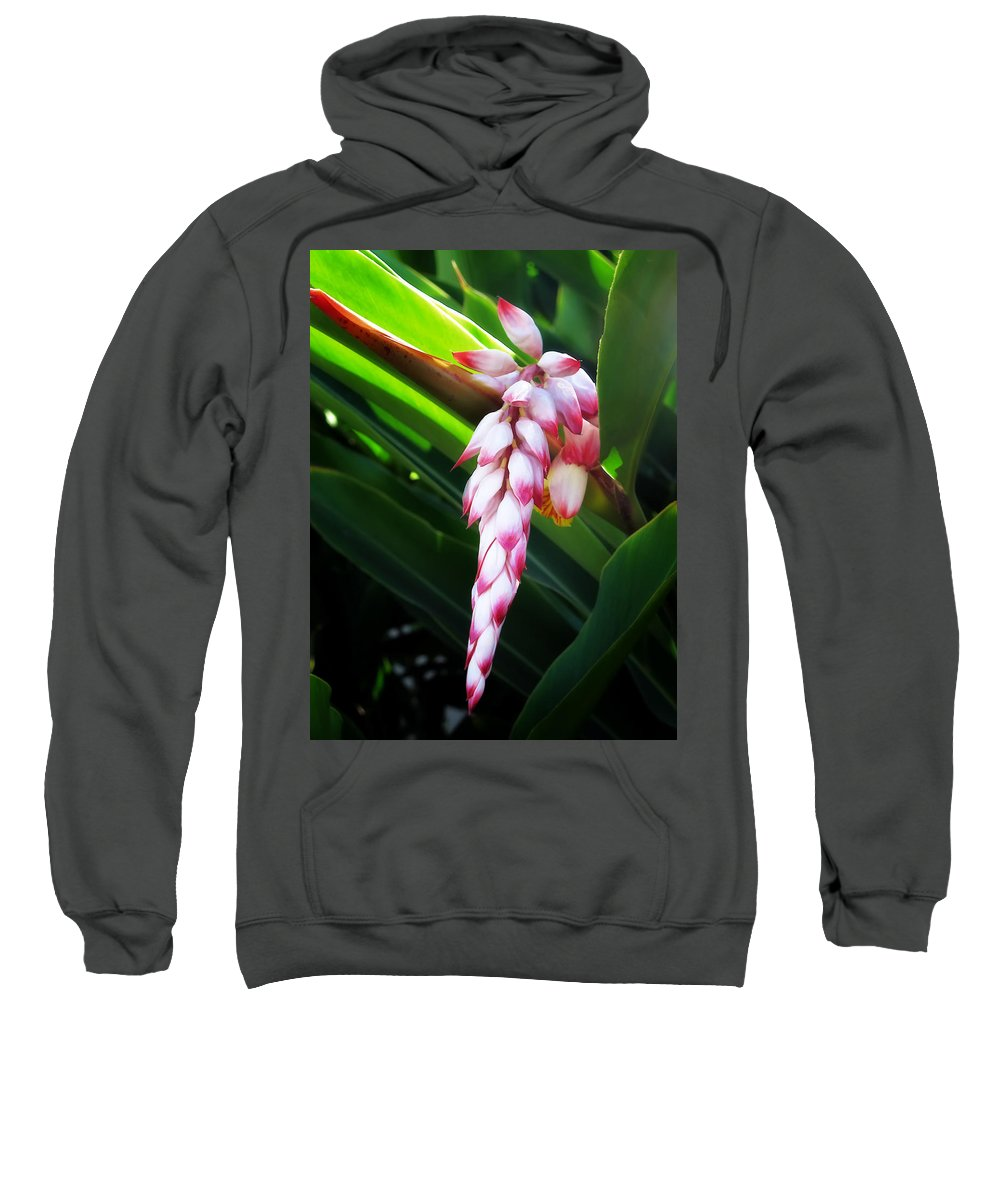 Pink Sweatshirt featuring the photograph Shell Ginger 1 by Dawn Eshelman
