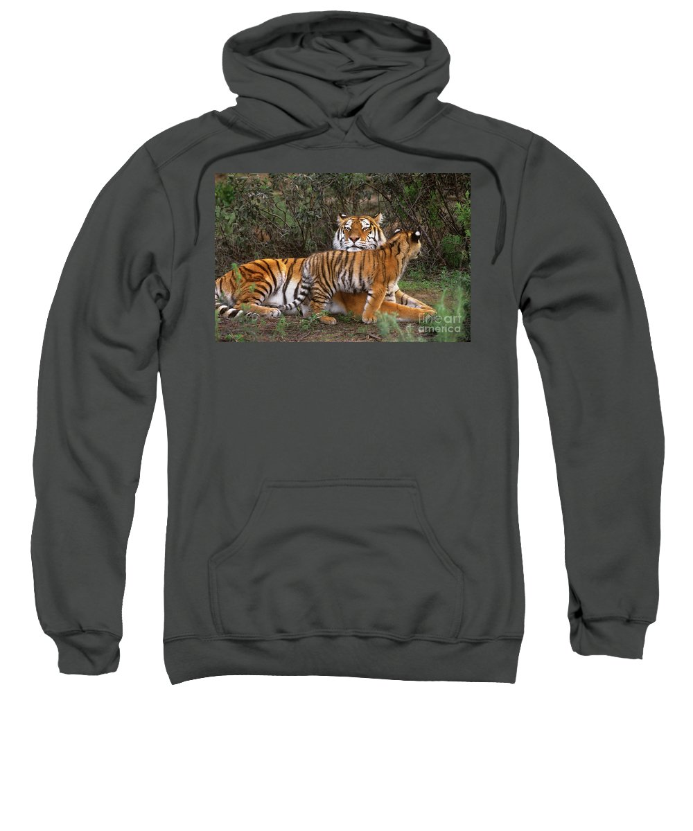 Native To Asia Sweatshirt featuring the photograph Siberian Tiger Cub Guarding Mom Wildlife Rescue by Dave Welling