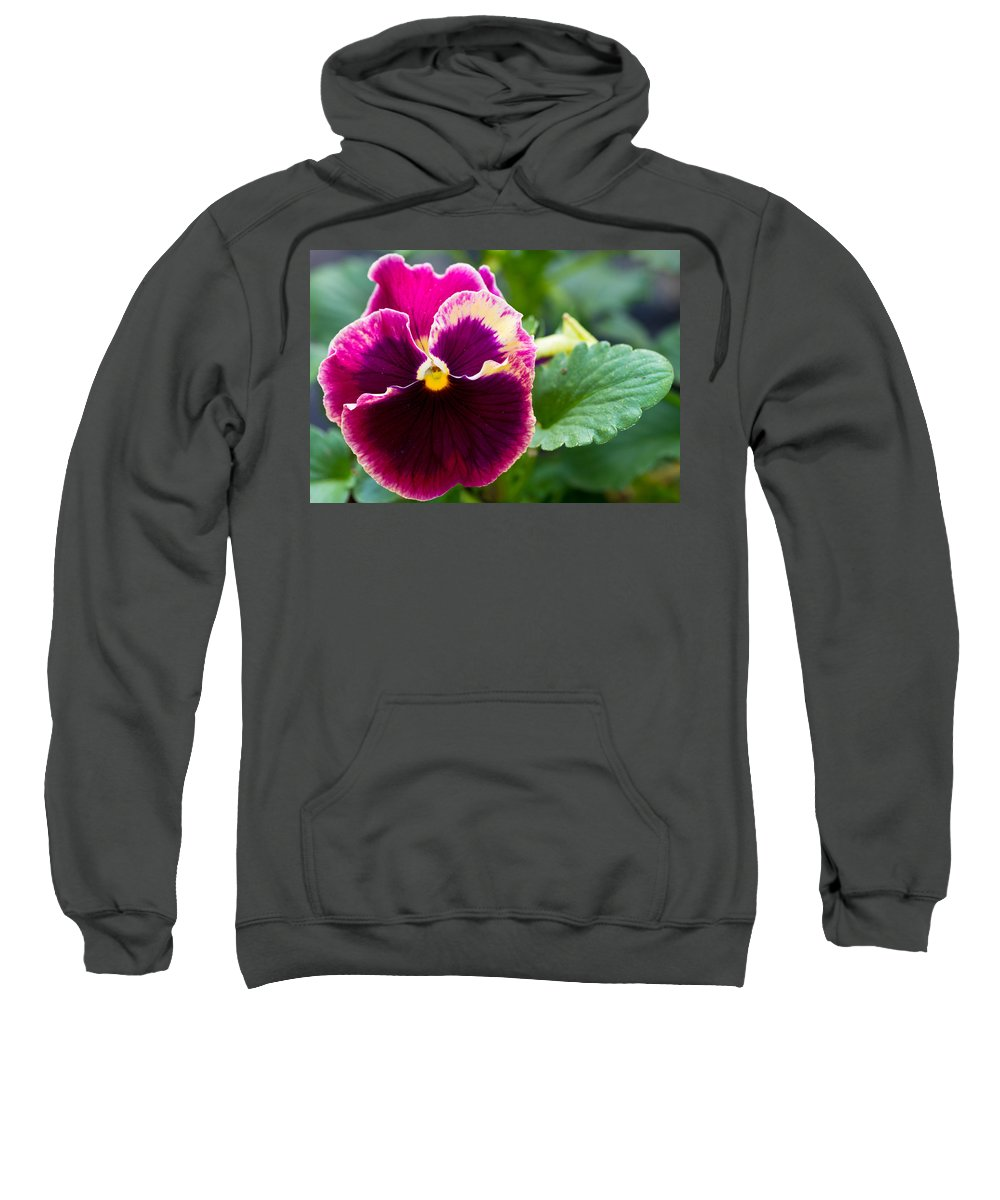 Agriculture Sweatshirt featuring the photograph Single Pansy by John Trax