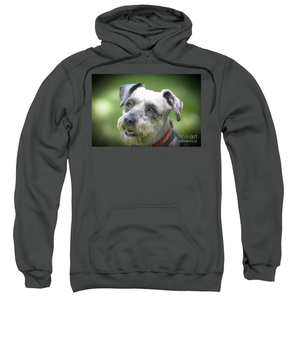 Pet Sweatshirt featuring the photograph Smiling Schnauzer by Elvis Vaughn
