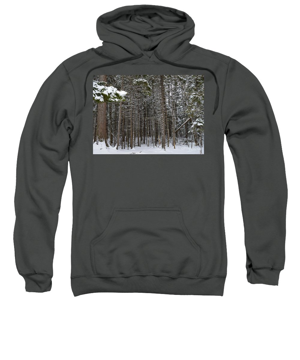 Forest Sweatshirt featuring the photograph Snowy Forest In Acadia by Meandering Photography