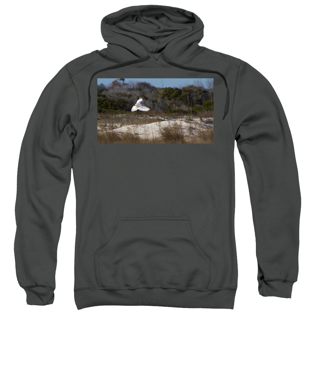 Snowy Owl Sweatshirt featuring the photograph Snowy Owl In Florida 18 by David Beebe