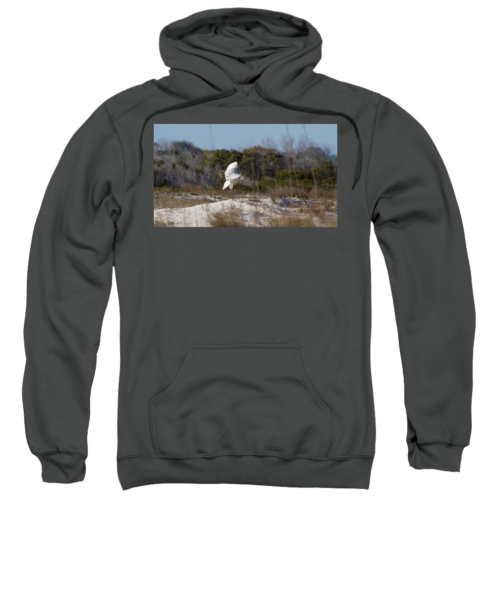 Snowy Owl Sweatshirt featuring the photograph Snowy Owl In Florida 19 by David Beebe