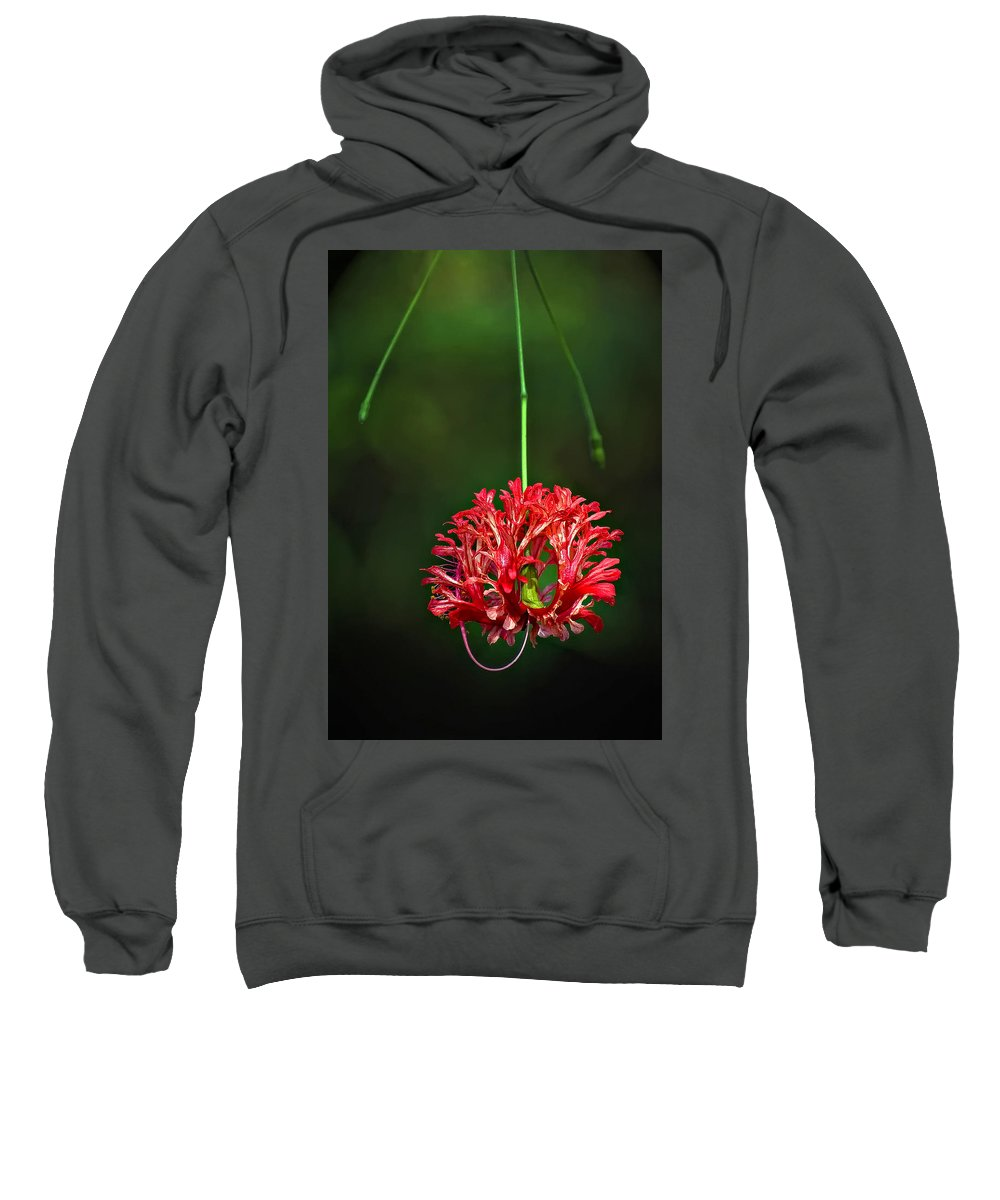 Flower Sweatshirt featuring the photograph Southern Belle by Steve Harrington