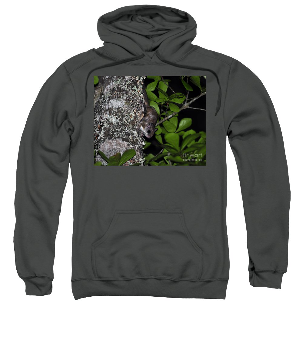 Squirrel Sweatshirt featuring the photograph Southern Flying Squirrel by Al Powell Photography USA