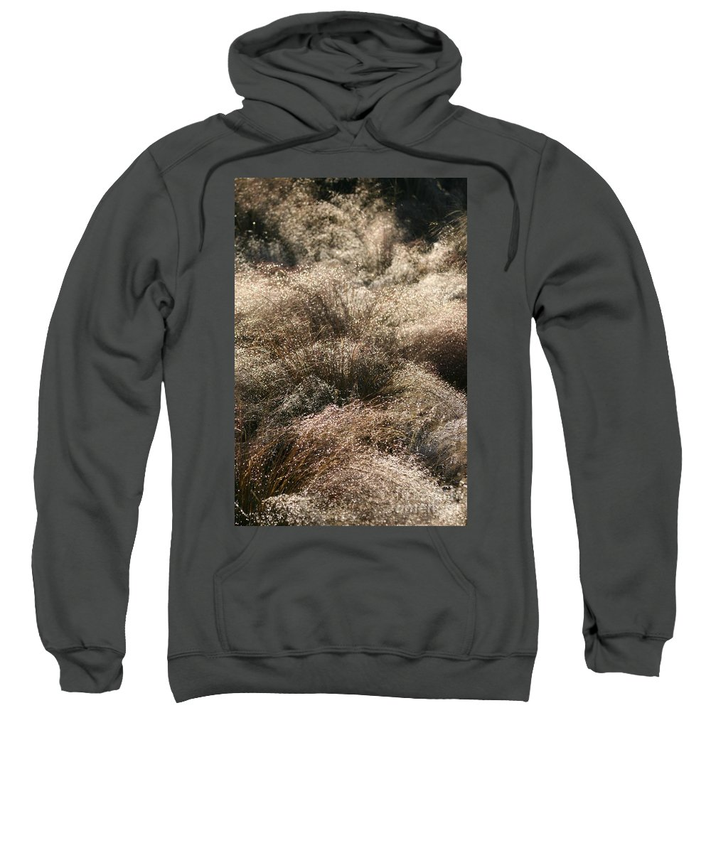 Grasses Sweatshirt featuring the photograph Sparkling Grasses by Nadine Rippelmeyer