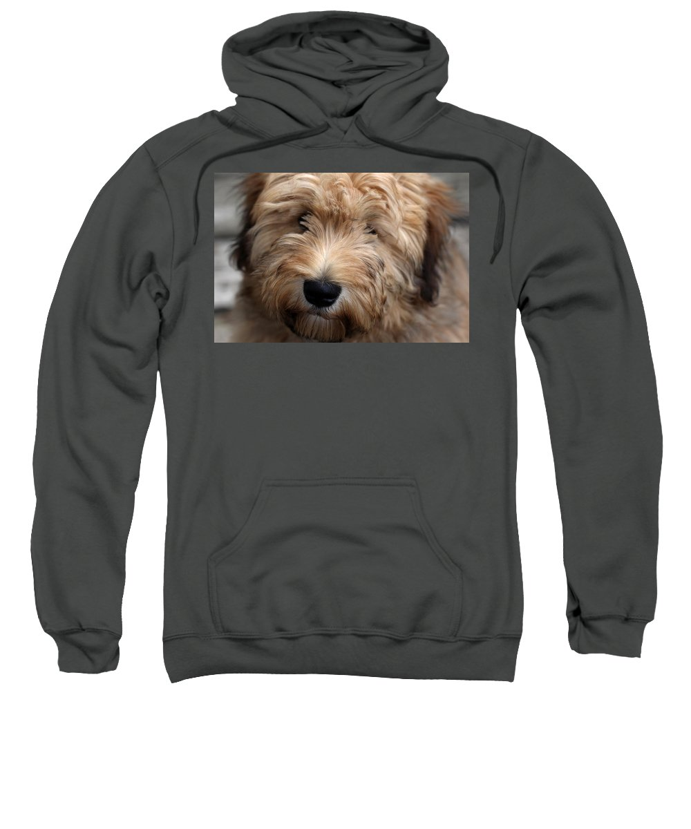Animals Sweatshirt featuring the photograph Spirited Kelsey by Debbie Oppermann