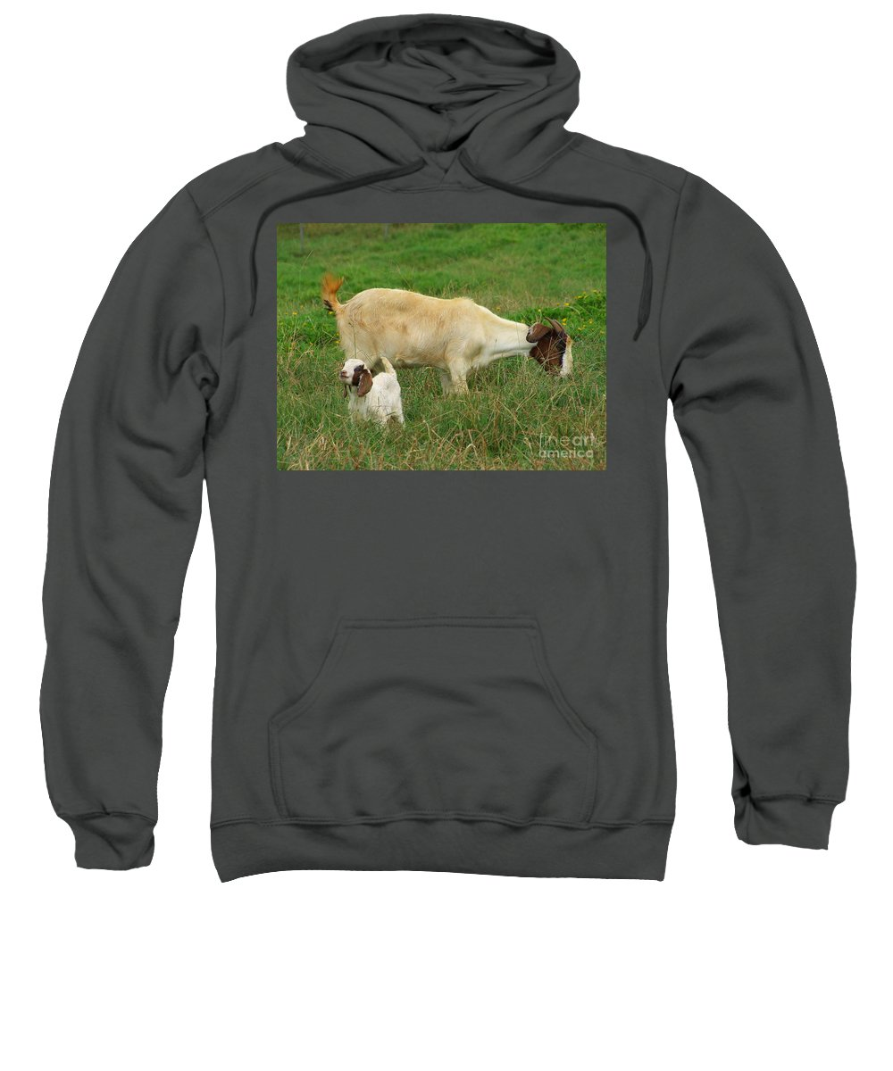 White Sweatshirt featuring the photograph Spring Born by Mary Deal