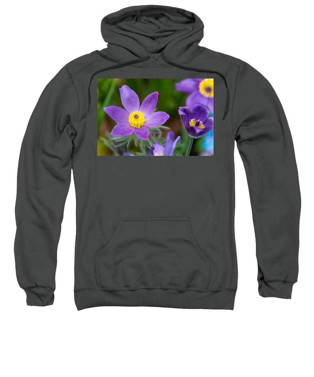 Pasque Flower Sweatshirt featuring the photograph Spring Flowers 1. Flowers Of Holland by Jenny Rainbow