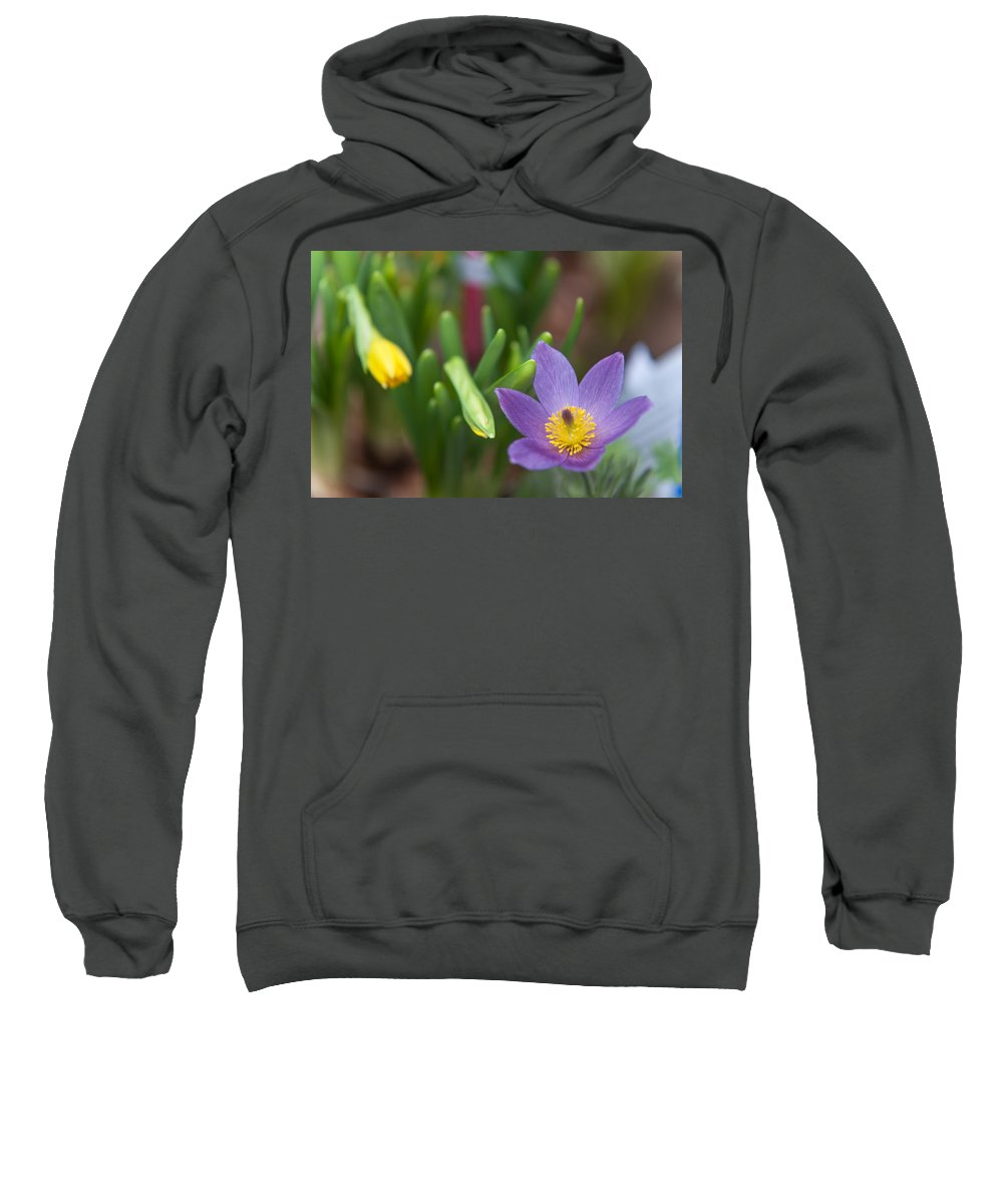 Pasque Flower Sweatshirt featuring the photograph Spring Flowers. Flowers Of Holland by Jenny Rainbow