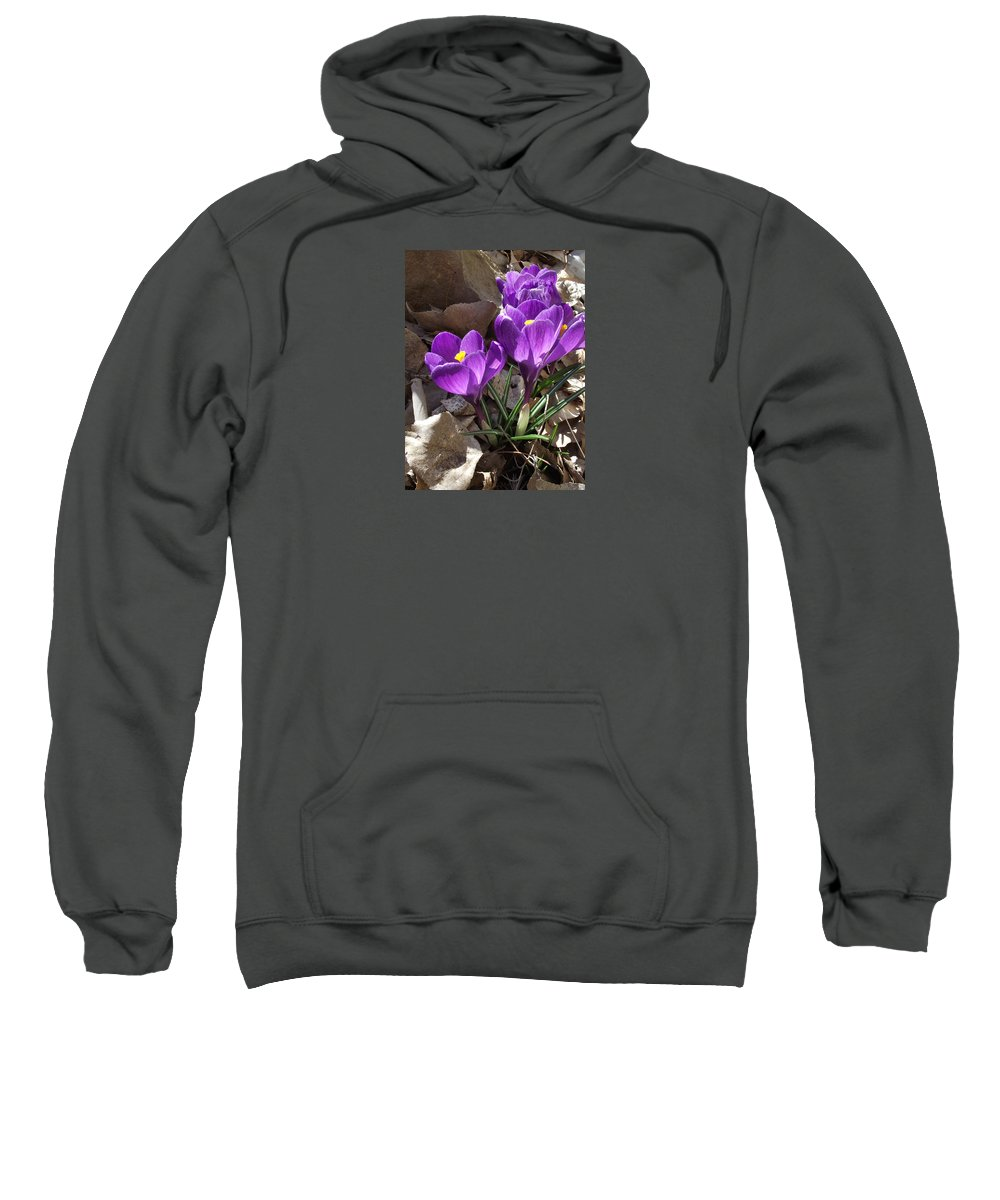 Spring Sweatshirt featuring the photograph Spring Glory by Mike and Sharon Mathews