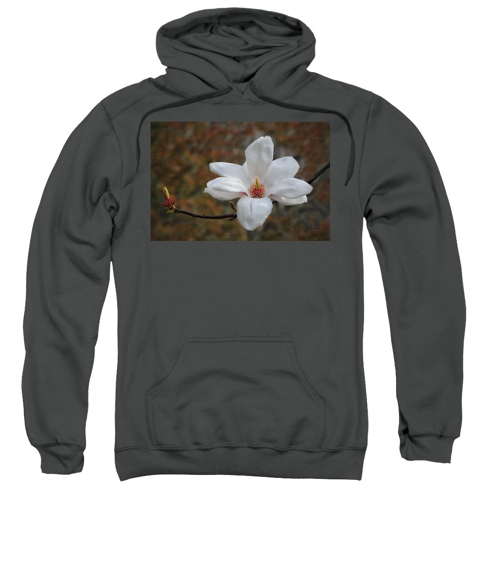 Magnolia Sweatshirt featuring the photograph Spring Magnolia by Dave Mills