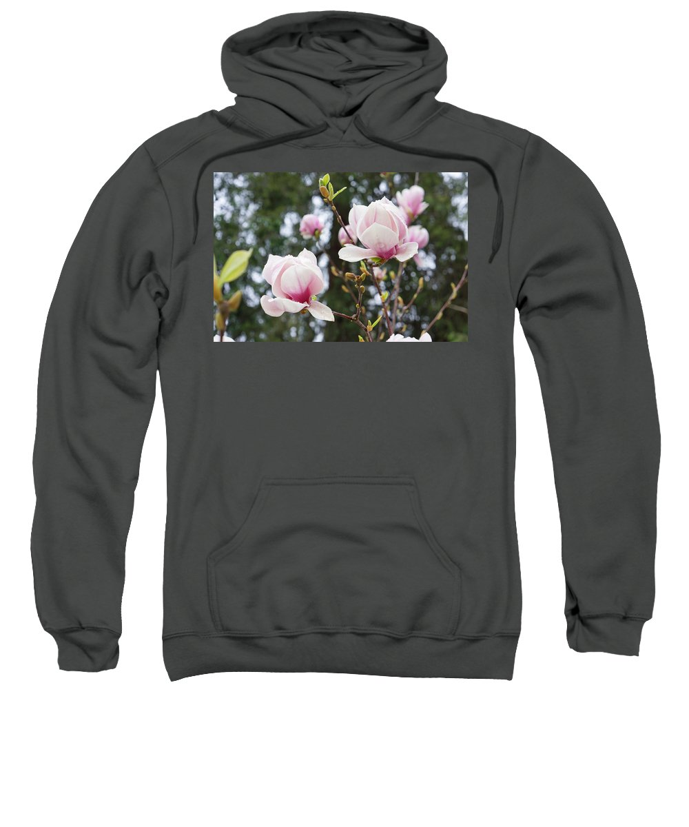 Raindrops Sweatshirt featuring the photograph Spring Magnolia Tree Flowers Pink White by Baslee Troutman