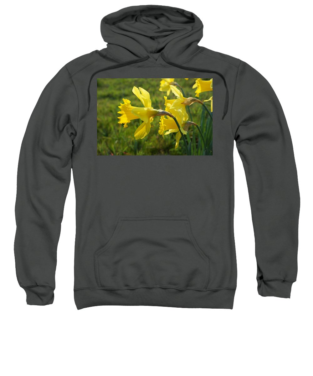 Meadow Sweatshirt featuring the photograph Spring Meadow Field Daffodil Flowers by Baslee Troutman