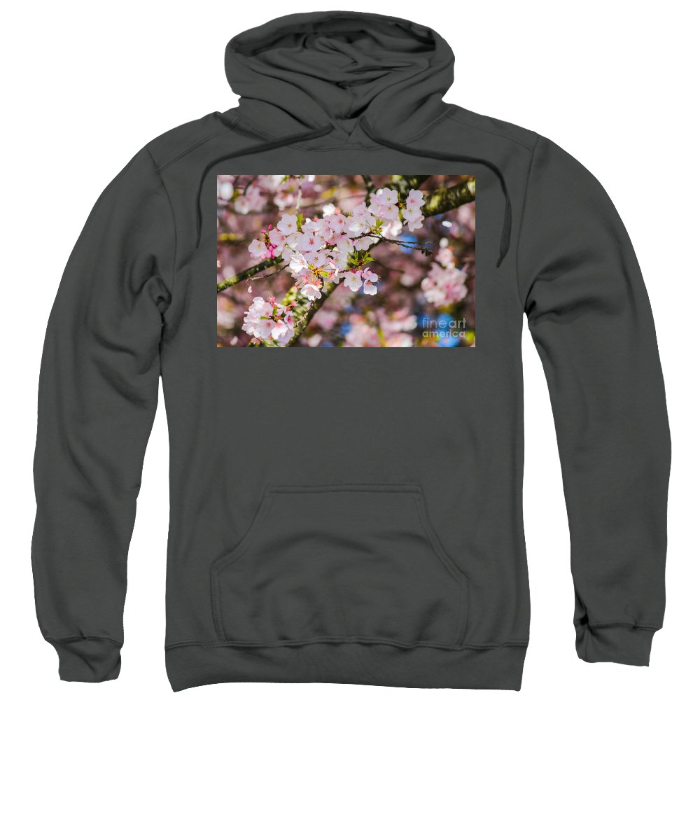 Cherry Blossoms Sweatshirt featuring the photograph Spring's First Blush by Patricia Babbitt