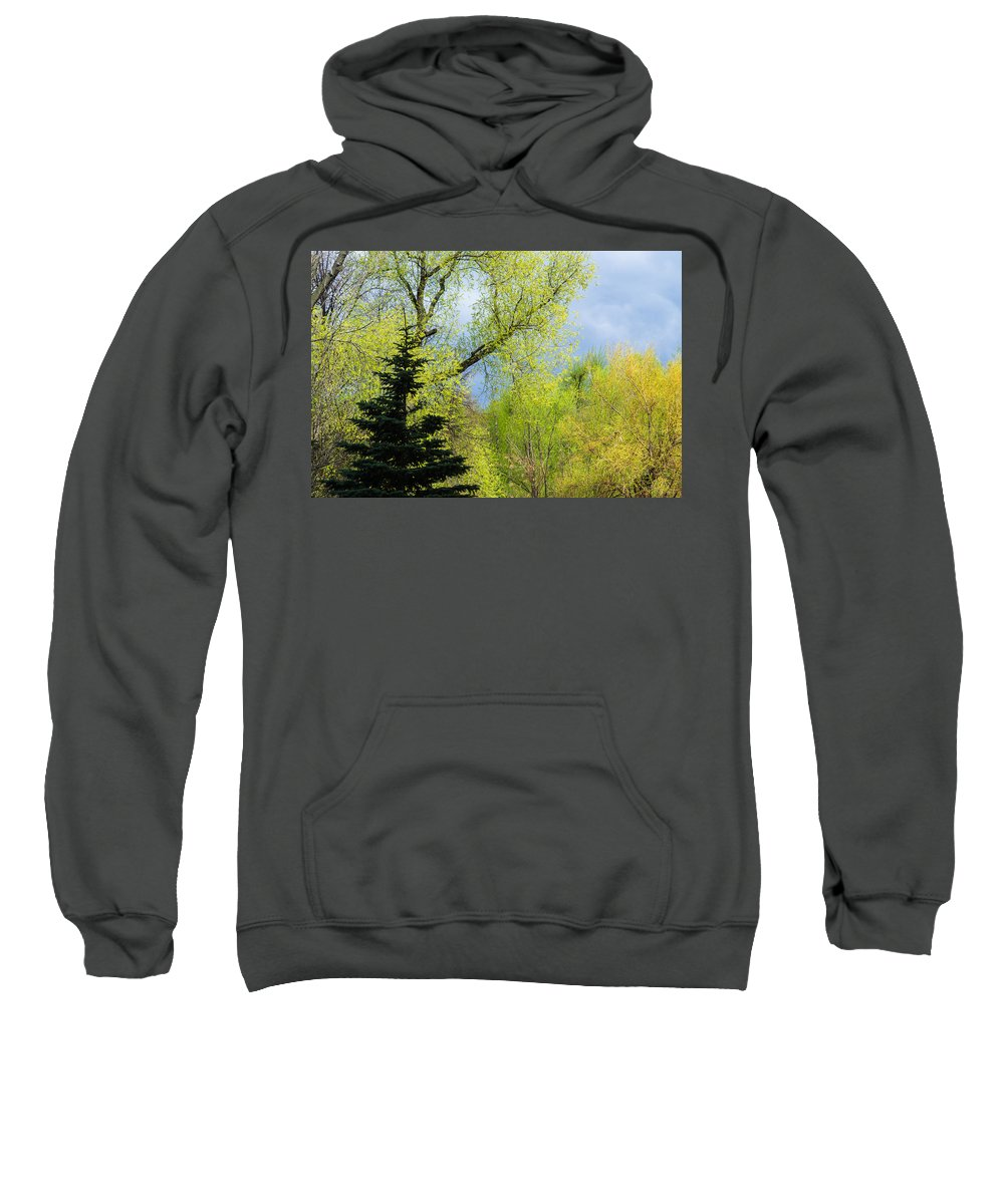Abstract Sweatshirt featuring the photograph Springtime - Feature 2 by Alexander Senin