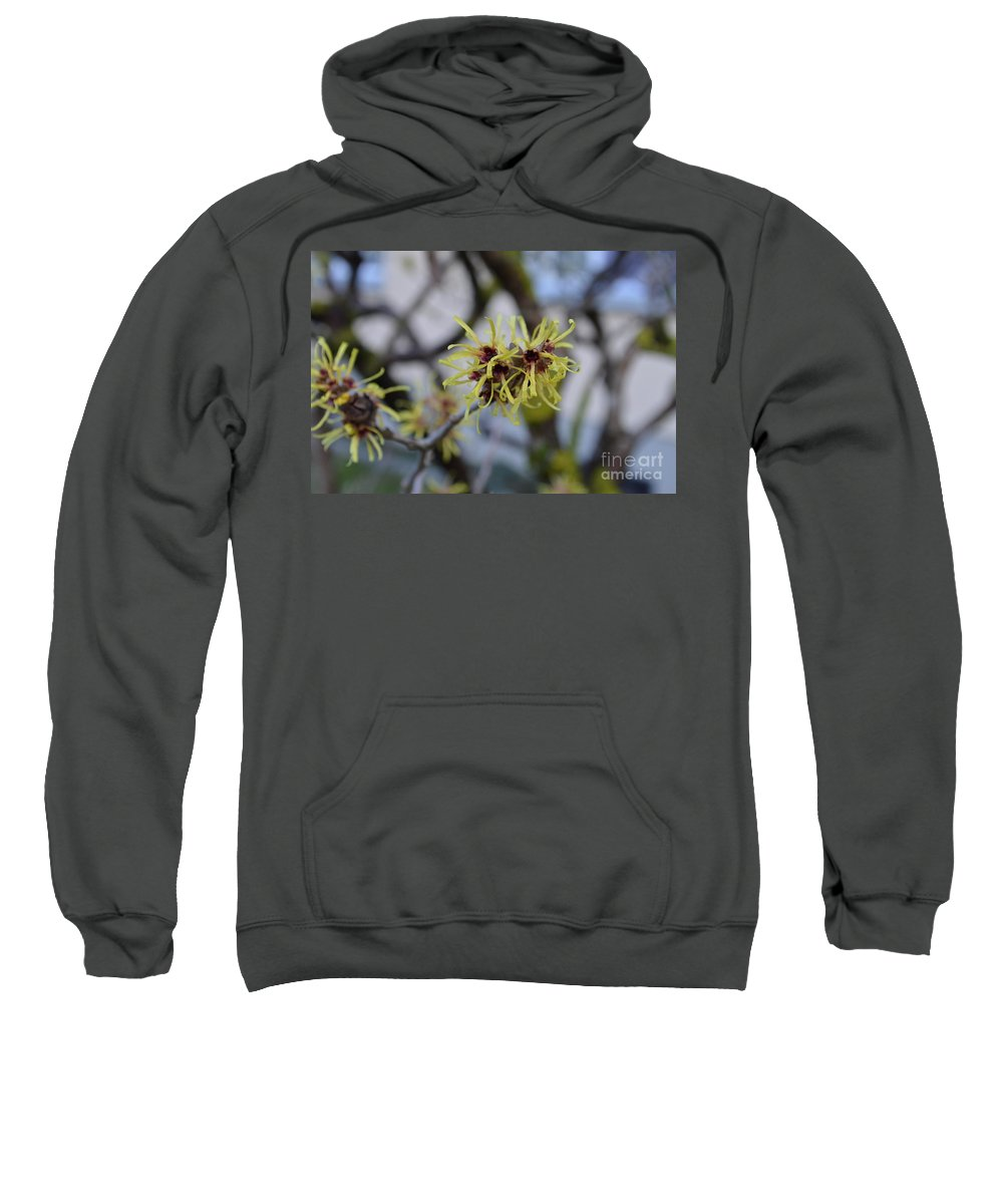 Hamamelis Sweatshirt featuring the photograph Spry In Yellow by Felicia Tica