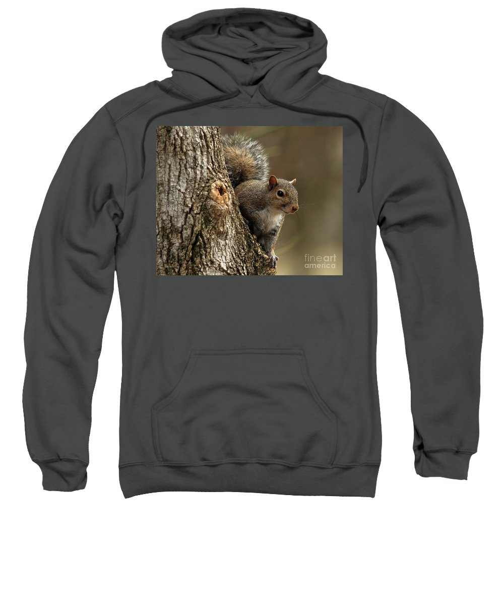 Squirrel Sweatshirt featuring the photograph Squirrel by Douglas Stucky