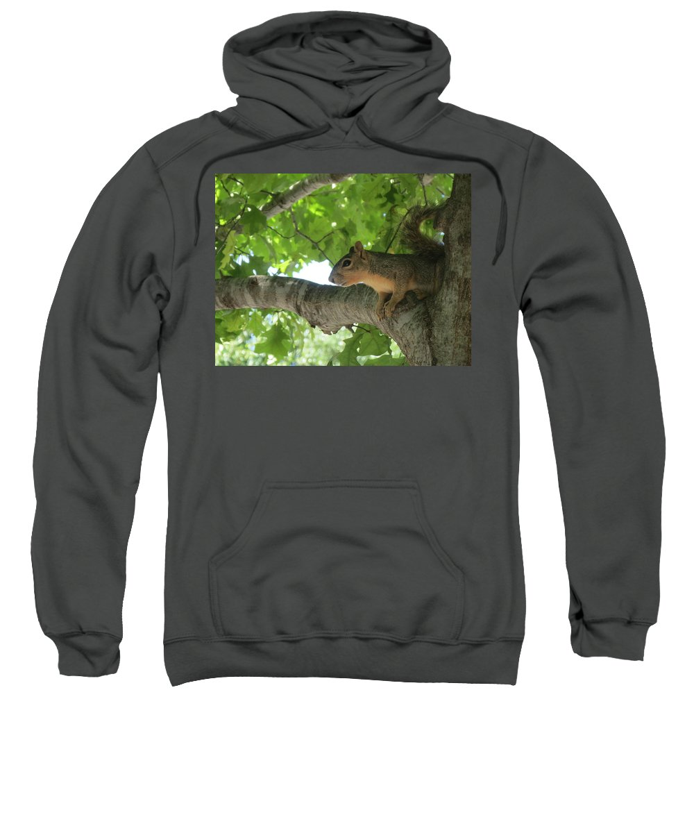 Nature Sweatshirt featuring the photograph Squirrel Focus by Cindy Clements