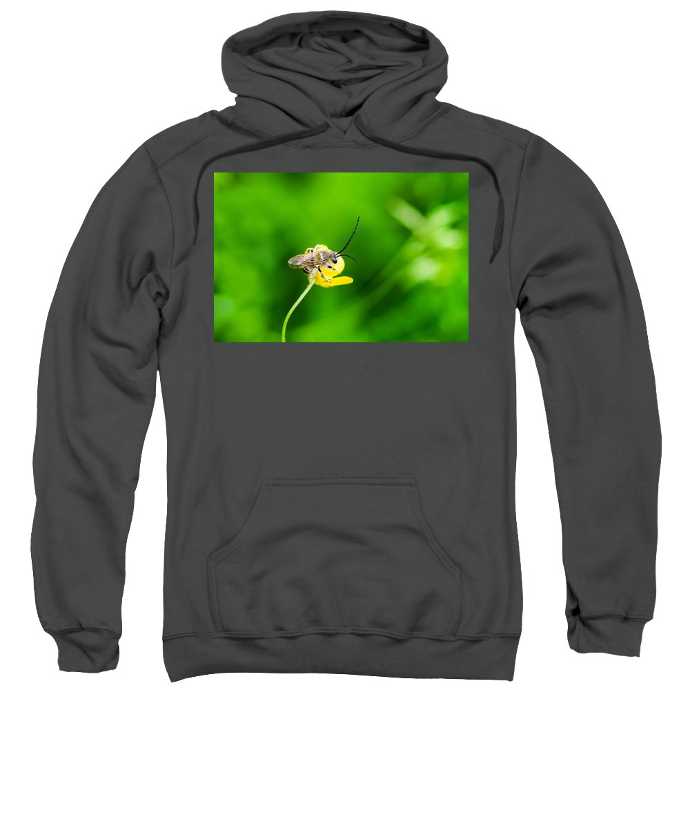 Animal Sweatshirt featuring the photograph Staking A Claim - Featured 3 by Alexander Senin