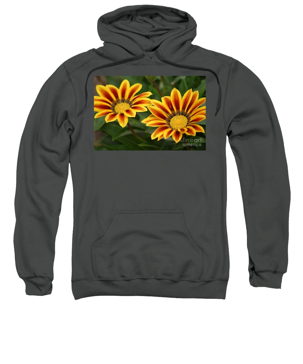 Gazania Sweatshirt featuring the photograph Striped Gazania by Living Color Photography Lorraine Lynch