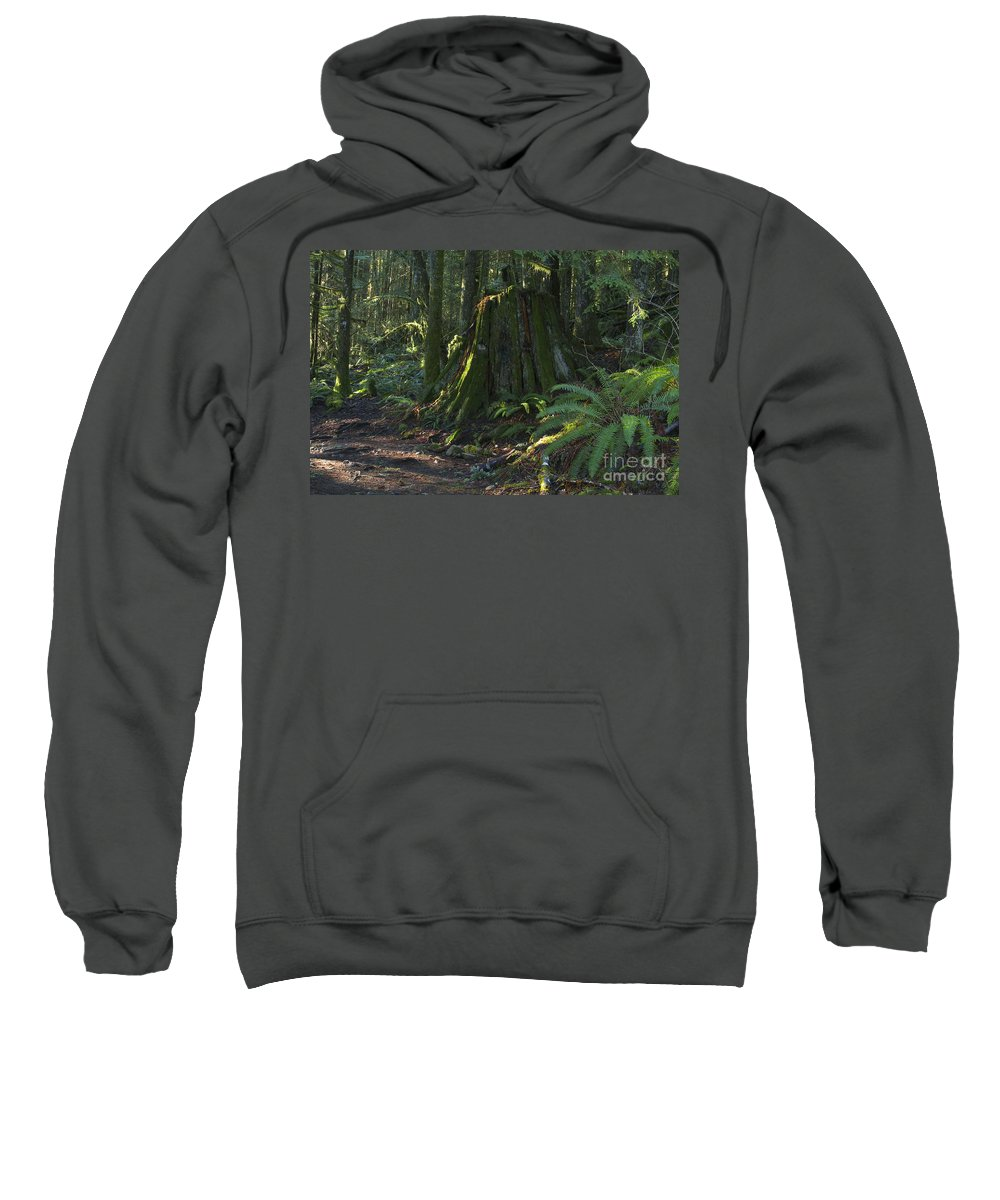 Stump Sweatshirt featuring the photograph Stump And Fern by Sharon Talson