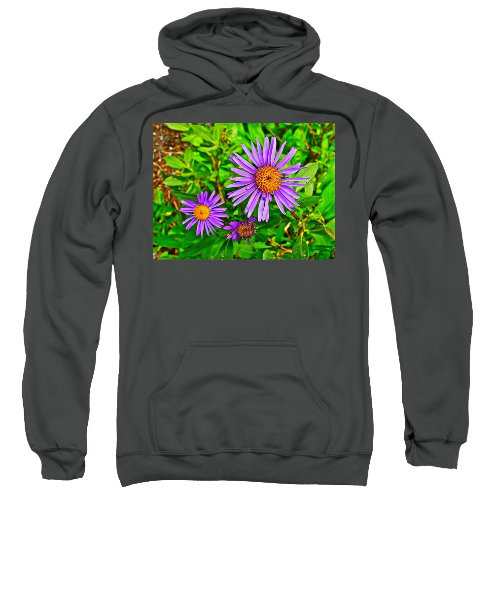 Subalpine Daisy By Vidae Falls At Crater Lake National Park Sweatshirt featuring the photograph Subalpine Daisy By Vidae Falls In Crater Lake National Park-oregon by Ruth Hager