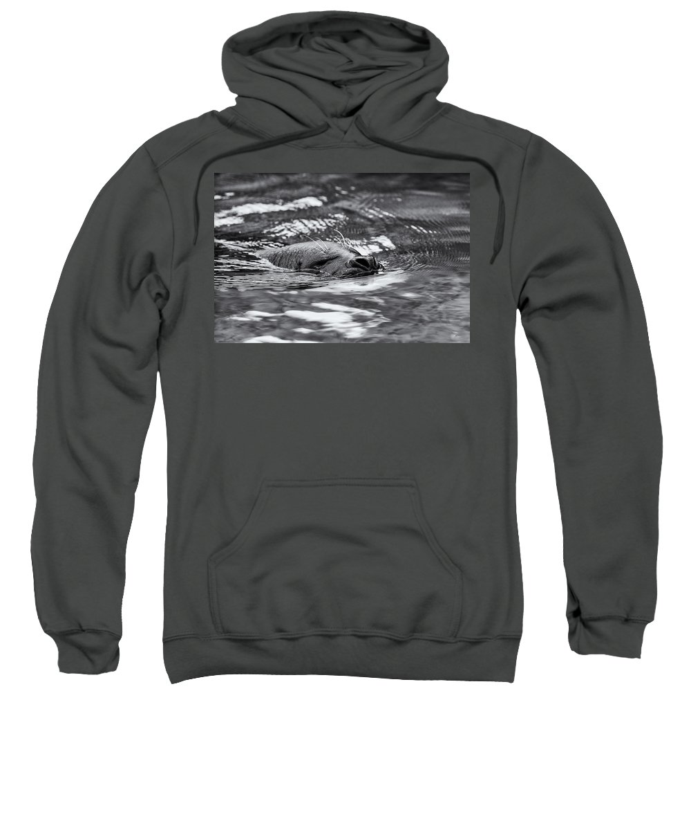 Animal Sweatshirt featuring the photograph Submerge by Jayme Spoolstra