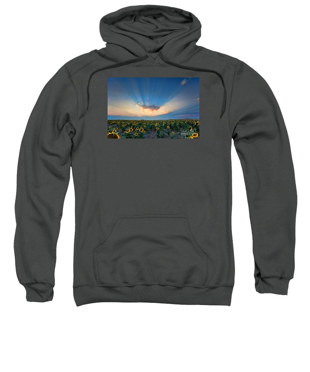 Flowers Sweatshirt featuring the photograph Sunflower Field At Sunset by Jim Garrison