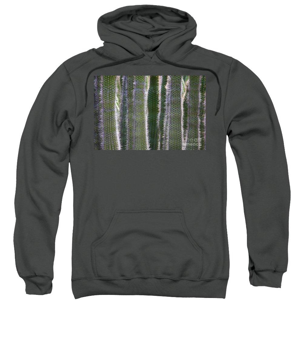 Cactus Sweatshirt featuring the photograph Sunlight Through Cacti by Carol Groenen