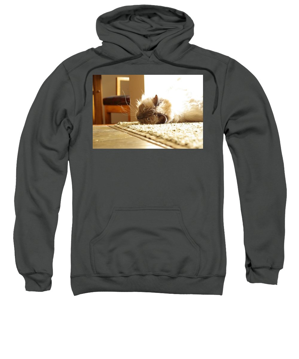Cat Sweatshirt featuring the photograph Sunny Jack by Cindy Johnston