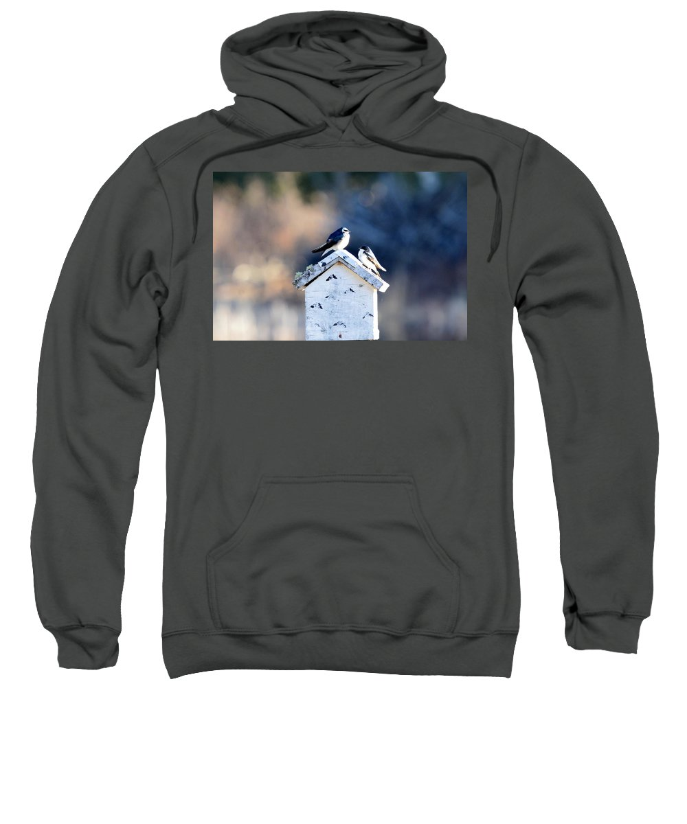 Tree Swallow Sweatshirt featuring the photograph Sunworship by Thomas Phillips