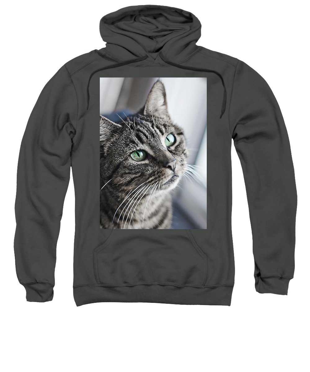 Cat Sweatshirt featuring the photograph Super Green by Alex Art and Photo