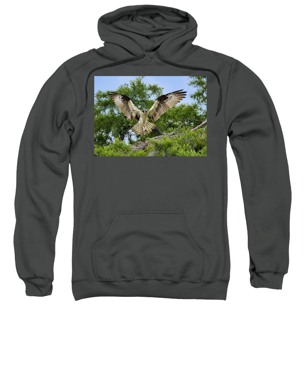 Dodsworth Sweatshirt featuring the photograph Surprise by Bill Dodsworth