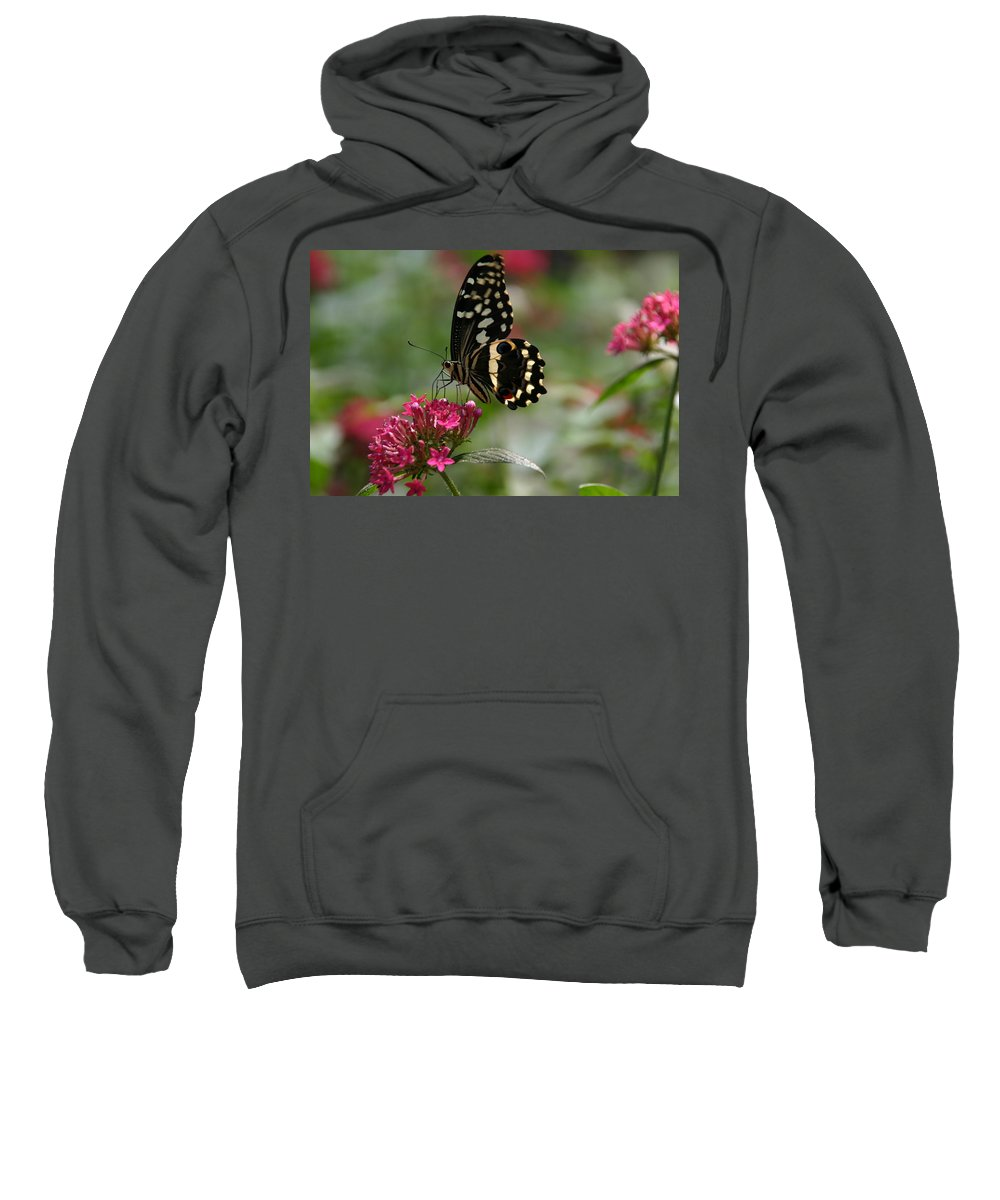 Sweet Nectar Sweatshirt featuring the photograph Sweet Nectar by Denyse Duhaime