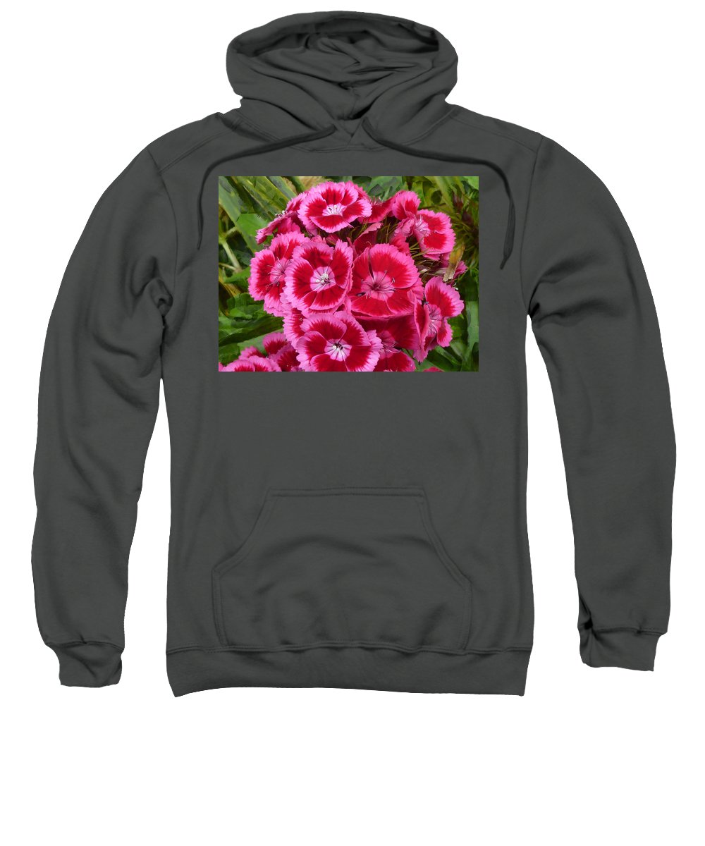 Pink Sweatshirt featuring the photograph Sweet William Has A Pink Eye by Steve Taylor