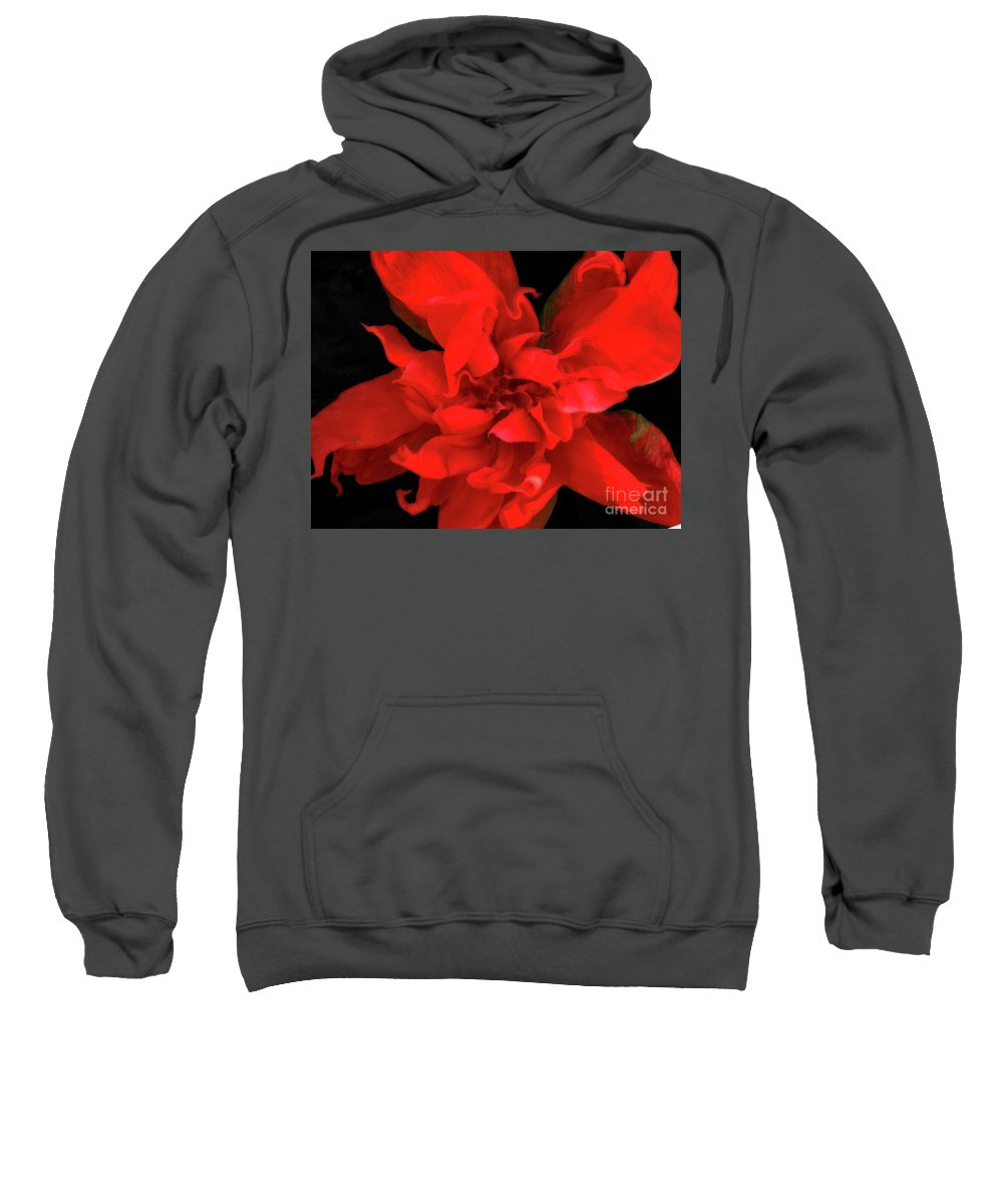 Flower Sweatshirt featuring the photograph Sweetheart by Molly McPherson