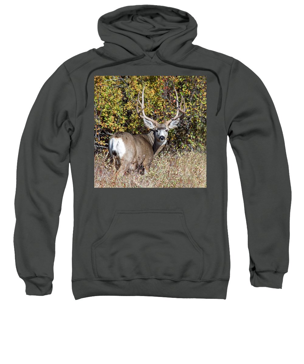 Mule Deer Sweatshirt featuring the photograph Tall And Handsome by Jack Bell